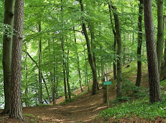 Barnim Hellsee Forest