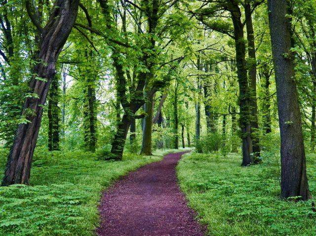 Berlin Jungle, Treptower Park