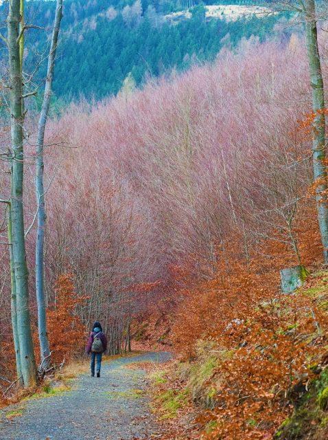 Harz, Wernigerode