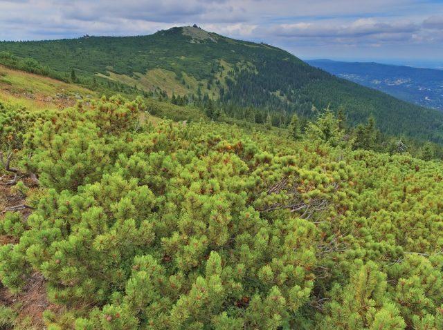 Giant Mountains, Riesengebirge, Karkonosze, Krkonoše