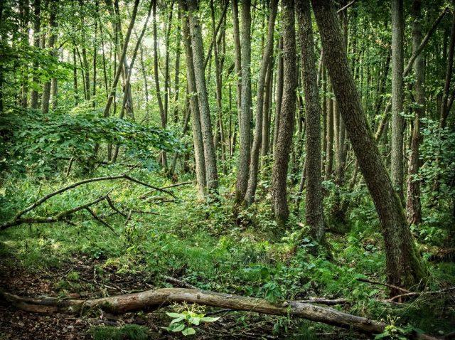 Barnim Herrensee Forest