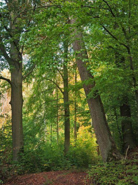 Schorfheide-Chorin NSG Plagefenn