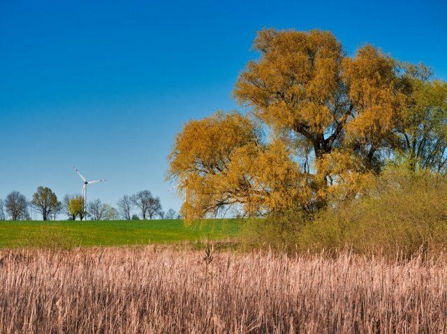 Landscape in Barnim