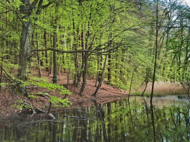 Biesenthaler Becken, Landscape in Barnim