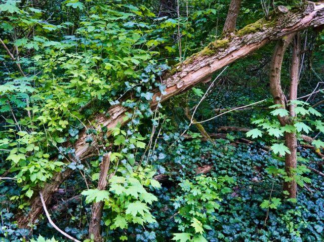 Berlin Jungle, Volkspark Prenzlauer Berg, Oberbruchkippe