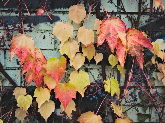 Autumnal Berlin, Engelsbecken