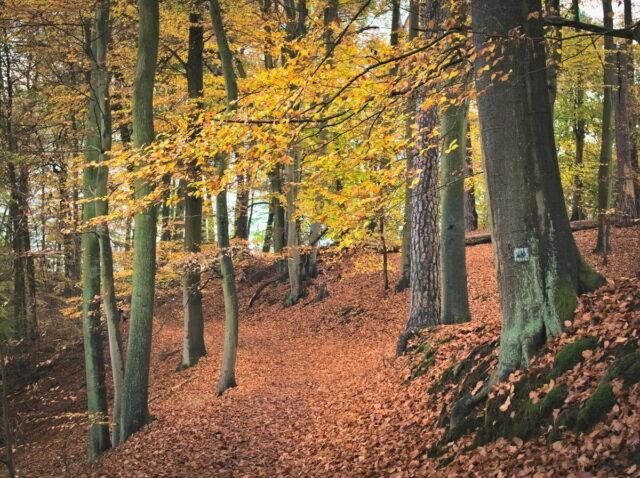 Hellsee, Autumnal Woods