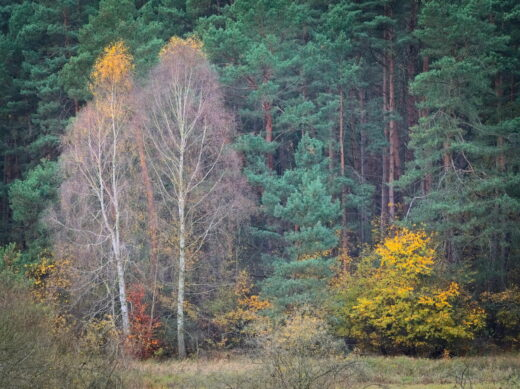 Autumnal Woods And Landscape