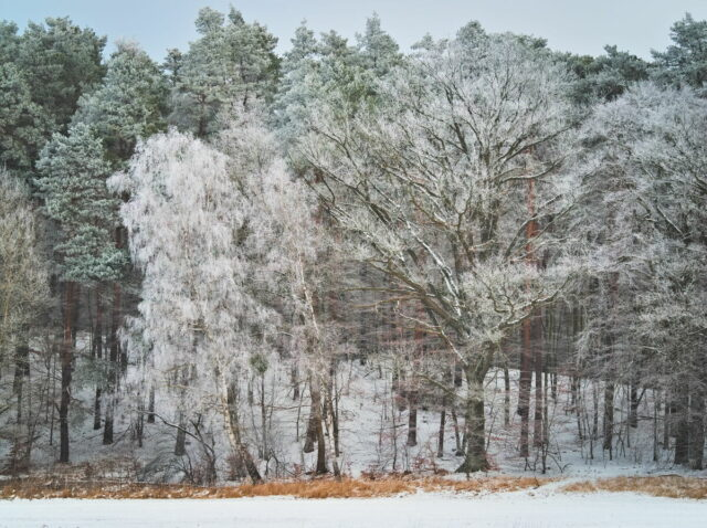 Winter in Biesenthal, Lobetal