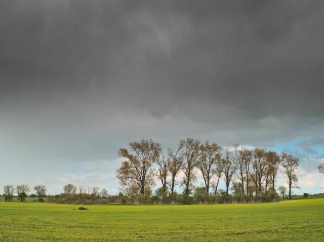 Blumenberger Runde, Barnimer Feldmark im Mai u.a. mit Rapsfeldern