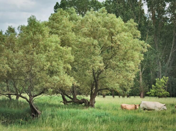 Hobrechtsfelde, Nature Park Barnim,