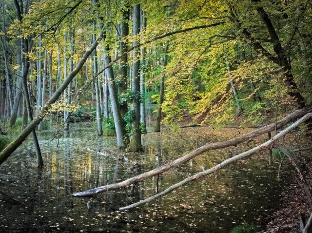 Nature Park Märkische Schweiz (Buckow)